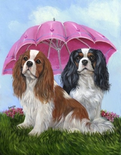 Cavalier King Charles Spaniel Royal Subjectsgf